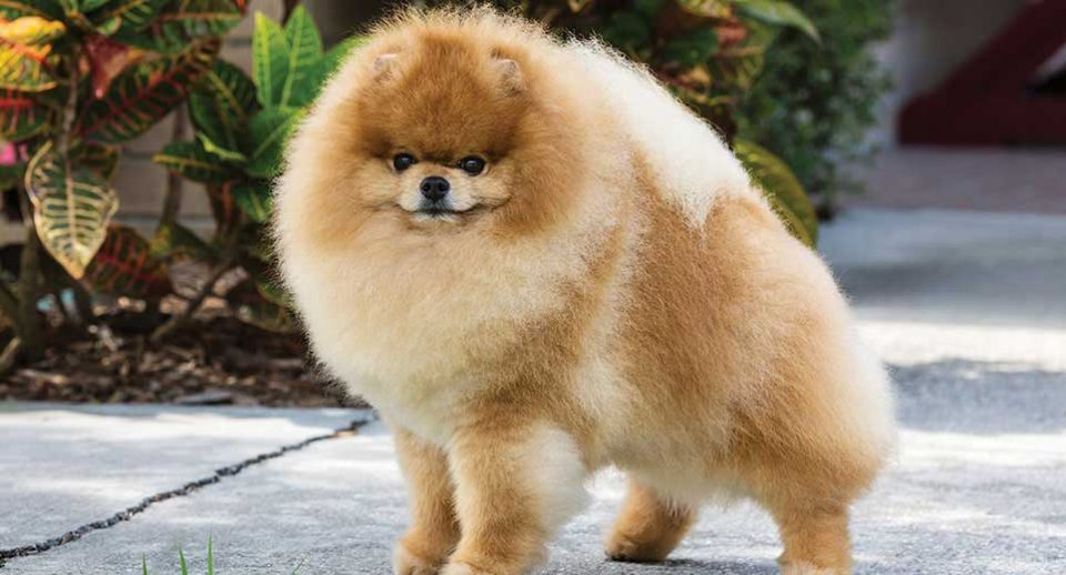 A dog standing